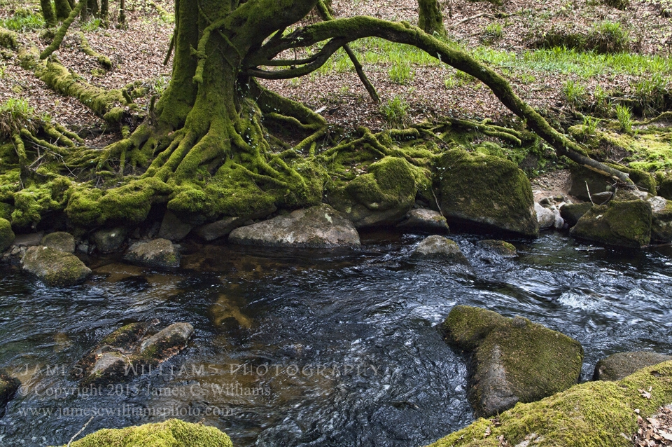 Mossy Roots and RocksGolitha Falls, Liskeard, Cornwall, EnglandColor Digital Photograph; shot 2010, final edit 2015
