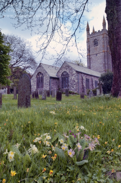 Primrose, St. Cuby's, Duloe, Cornwall, EnglandColor Digital Photograph; Shot in 2010, processed for final print 2015.