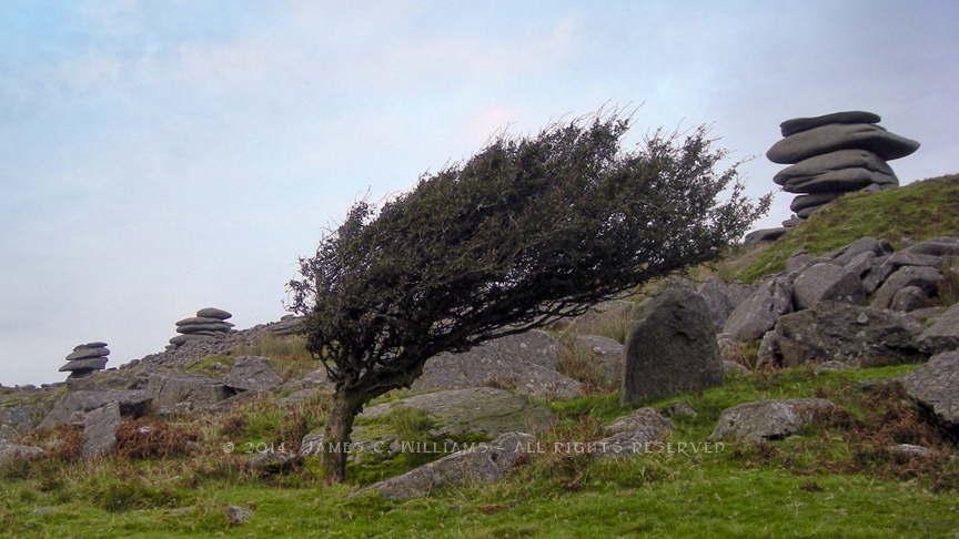 A windswept tree on Stowe's Hill, Bodmin Moor, Cornwall, England. Shot 2008, edited 2014. Rock formation on the left is known as the Cheesewring.