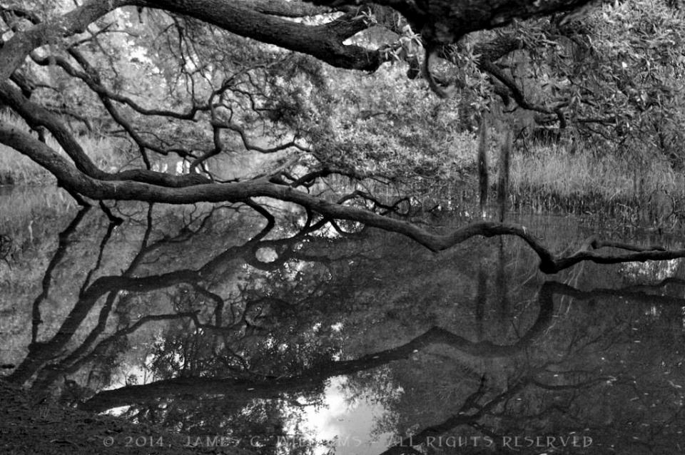Creek-Oak-72-BW_SCO1772-1024x680