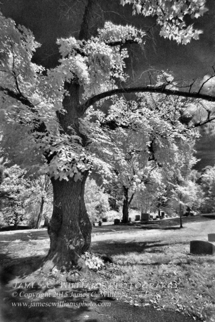 Maple Roots and Shadows, Green Hill Cemetery, Greensboro, NCInfrared Digital PhotographJames C. Williams Photography© Copyright 2015 James C. Williamswww.jamescwilliamsphoto.com