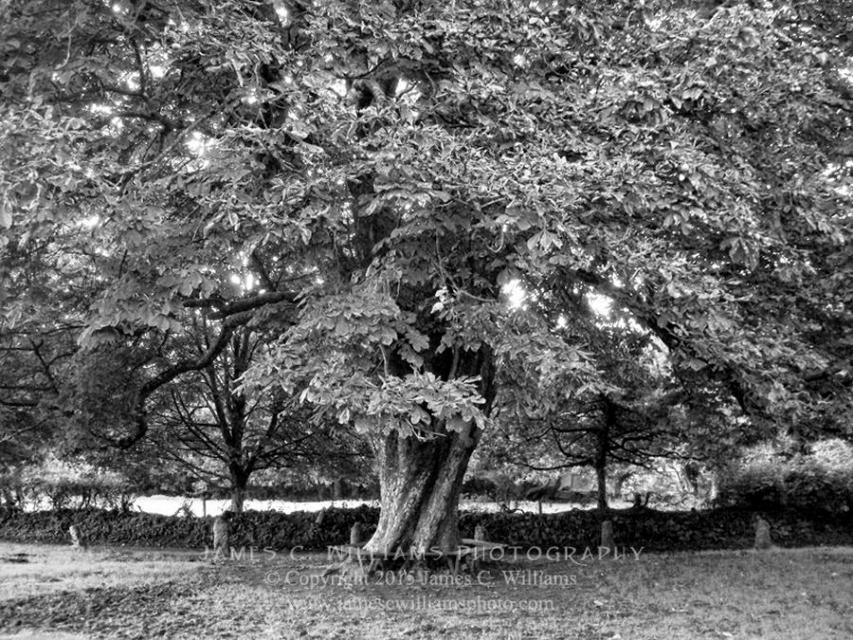 Shot in 2008, final edit processed 2015.Tree On The Green, Widecombe-in-the-Moor, Dartmoor, EnglandJames C. Williams Photography© Copyright 2015 James C. Williamswww.jamescwilliamsphoto.com