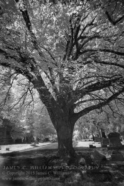 Trees of Green Hill, Greensboro, NCDigital Infrared Black and White Photograph© Copyright 2015 James C. WilliamsAll Rights Reserved