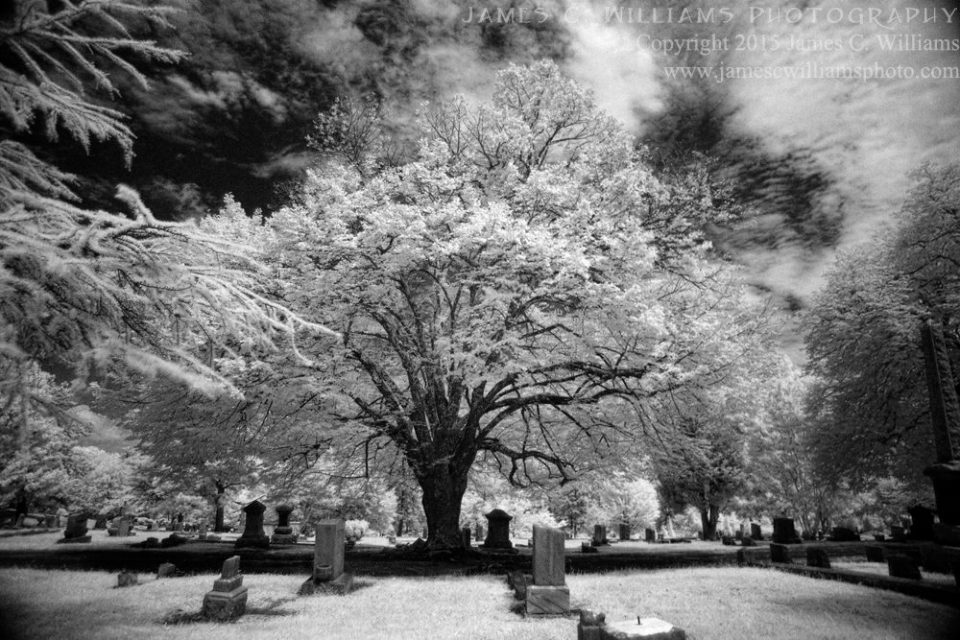 Trees of Green Hill, Green Hill Cemetery, Greensboro, NCDigital Infrared Black and White PhotoJames C. Williams Photography© Copyright 2015 James C. Williamswww.jamescwilliamsphoto.com