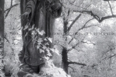 Angel with ivy growing upon it in Hollywood Cemetery, Richmond, VA. Infrared film image; shot, developed 2012, scanned & processed in 2015.