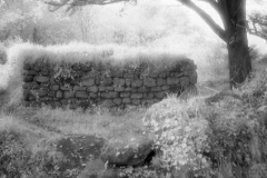 Captured on Kodak HIE-135 Infrared Film September 13 2008 - Final version created 3/1/09 - Madron Holy Well - Cornwall England